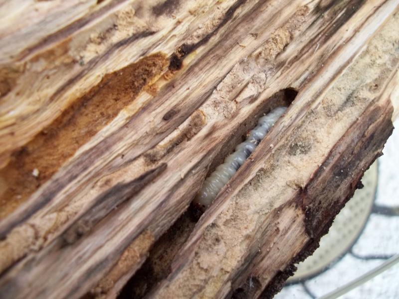 un intru dans mon bois 4355961001178