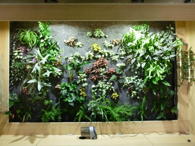 Le nouveau mur végétal de Olivetzou (projet fini à 98%) enfin les leds - Page 4 437608P1010467