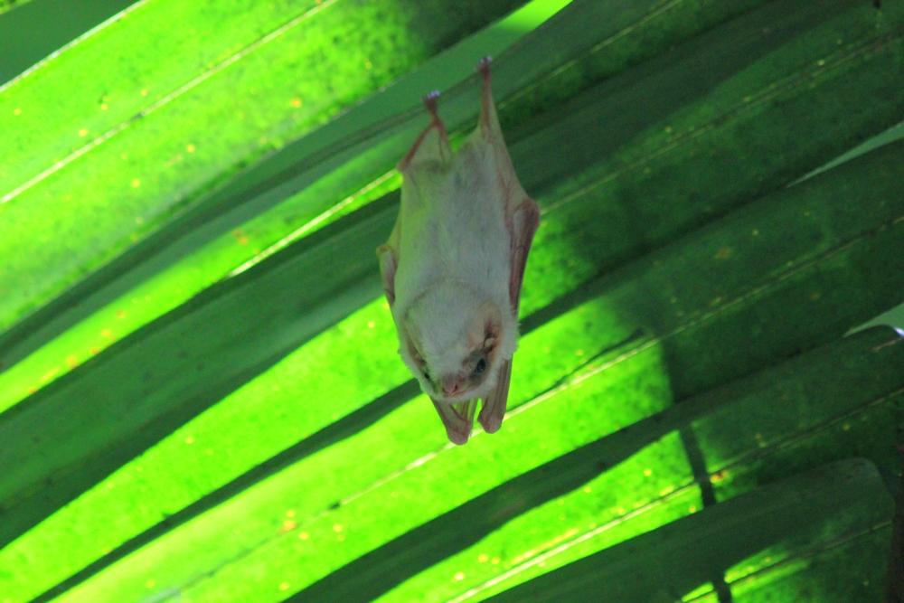 15 jours dans la jungle du Costa Rica 441281bat2r