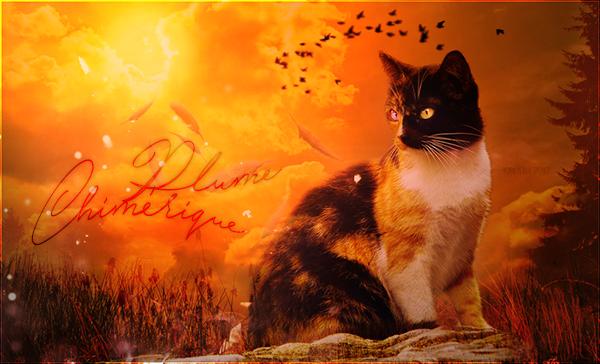 ♛Unknown Cat Battleground♛ - Page 5 44555390pc