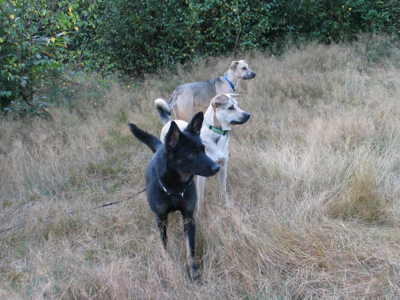 > Mika, un amour de petite chienne, née en mai 2011 - Adoptée 446165IMG0019