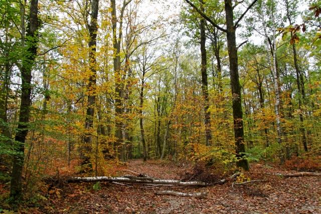 Les couleurs de l'automne 447574IMG_7533_DxO__640x480_