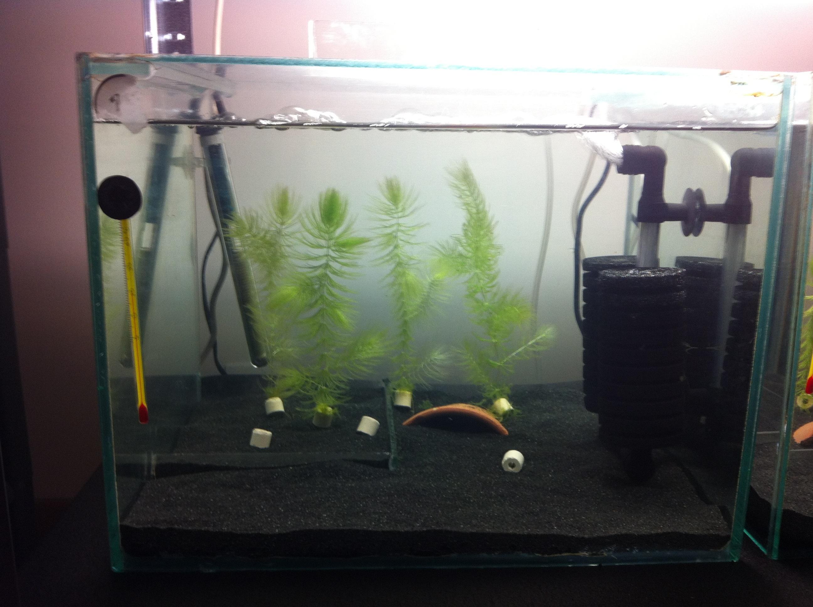 Shrimp zone 448047image