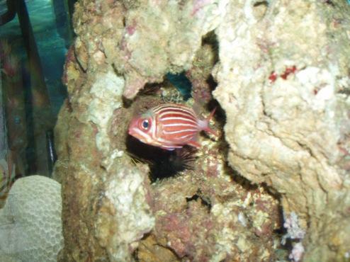 agressivité des poissons 449077PB300015