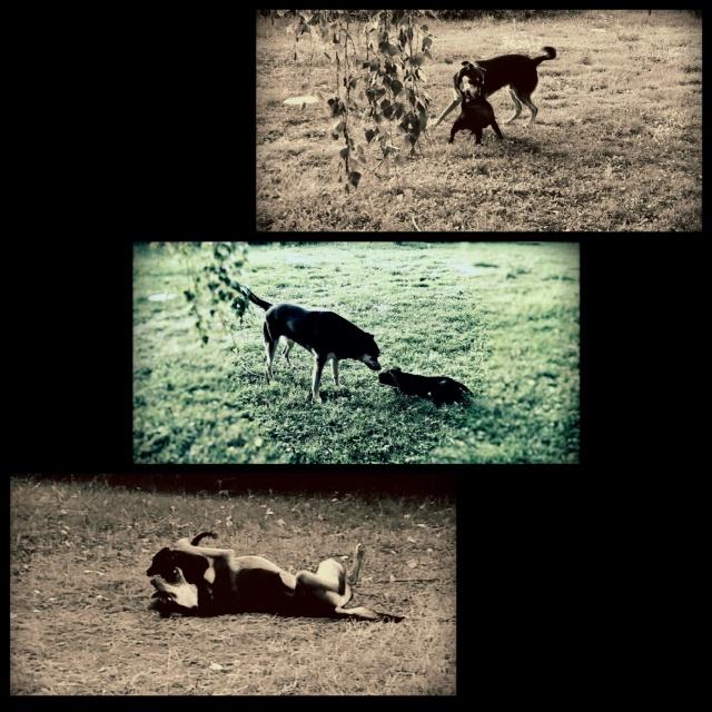 Kami, chien de randonnée - Page 18 449461Phototastic180820155e4cf99c16c041eda80d8860892b449c