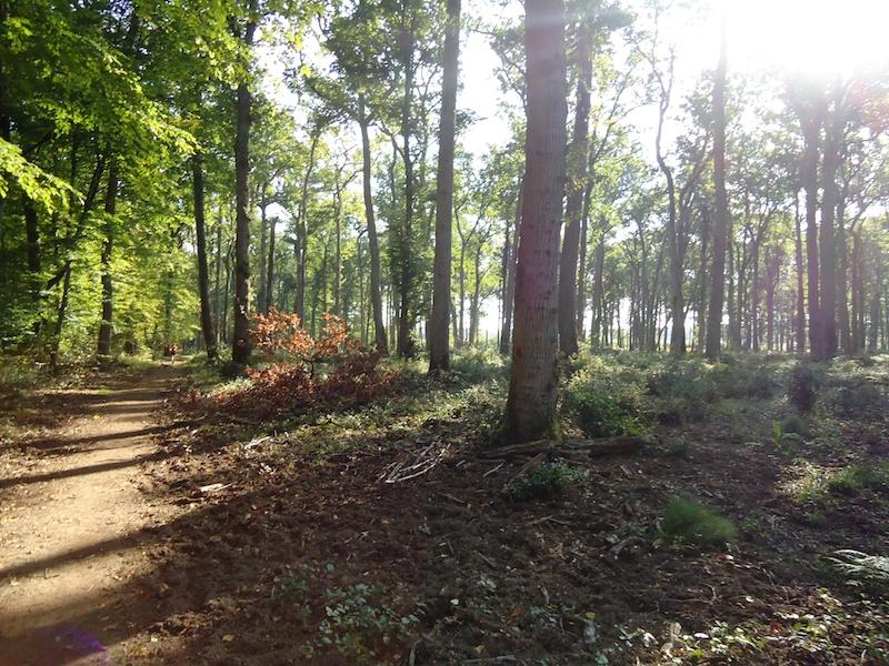 [ Trail de la forêt de Russy ] Gégé45 449965Trail_de_la_foret_de_Russy_10_10_2010_5