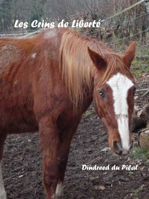 (Dept19) DINDREED DU PILAT, TF, sauvé par Marjan !! (Février 2015) - Page 2 450120P1050046