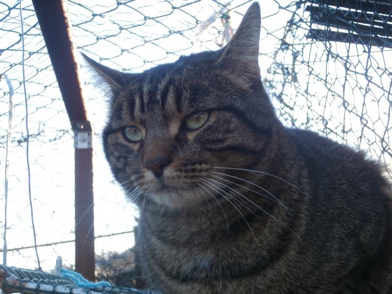 Mickey ( mâle européen tigré) 450924PC285412