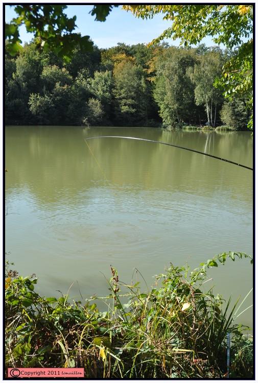 Vendredi jour du poisson 459363action1
