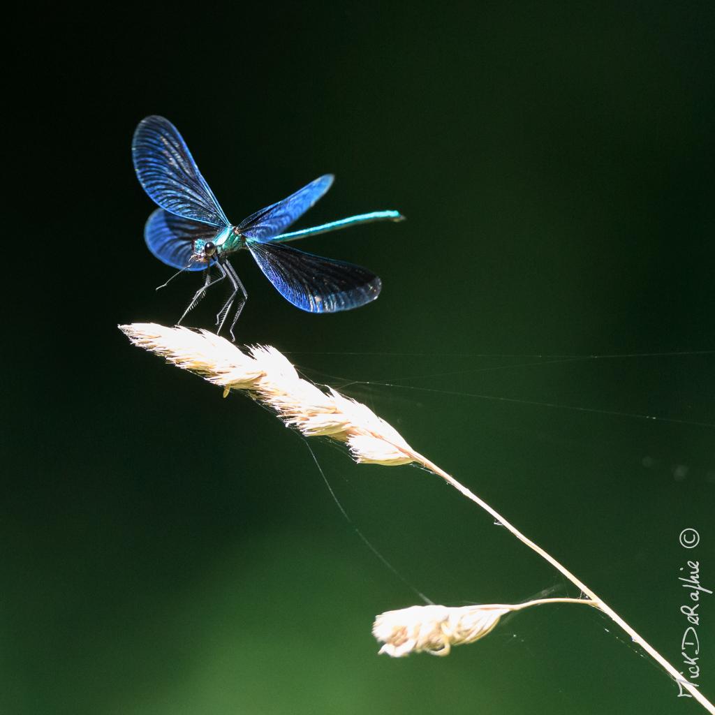 Insectes et Proxi. [Fil Ouvert] 460071T5600x372800211