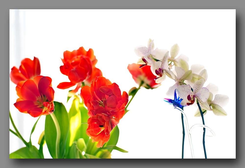 essais de High-Key avec fleurs 462372highkeyfleursD30060mm