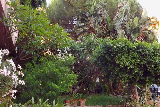 Italie - flore de Sicile 467682petitjardin2