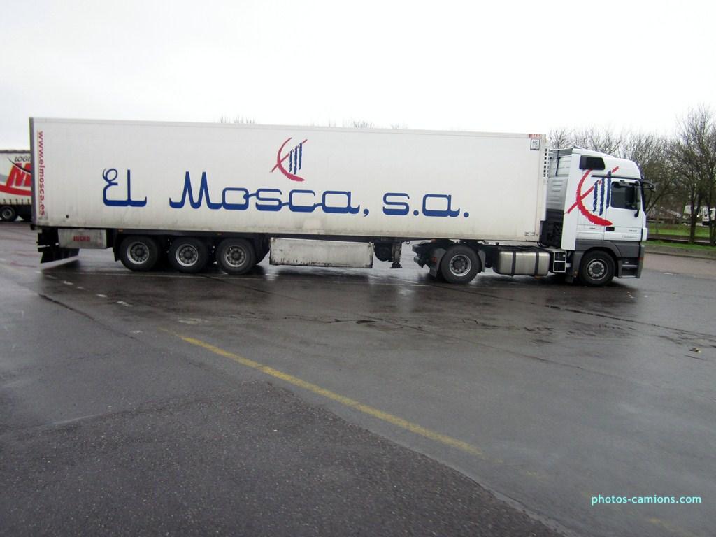 El Mosca  (Molina de Ségura) 475404IMG1092Copier