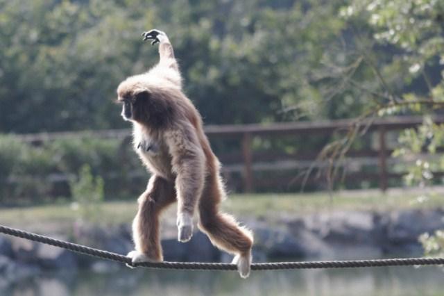 Zoo du Pal (Allier: Dompierre sur Besbre) 476028IMG_5868_DxO__640x480_