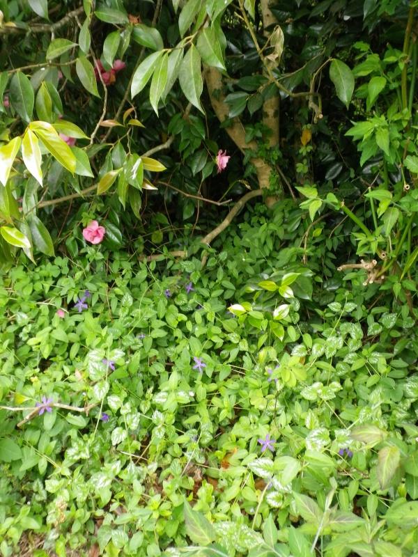 (40) Plantarium et chemin de ronde - Gaujacq - Page 2 476896IMGP4526