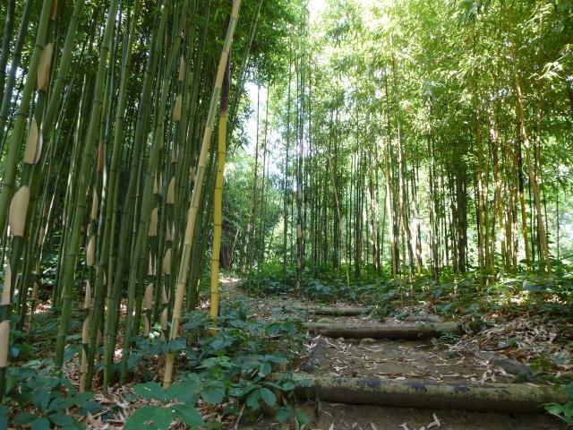 (26) Jardin Zen d'Erik Borja - Beaumont Monteux 480021P1020189
