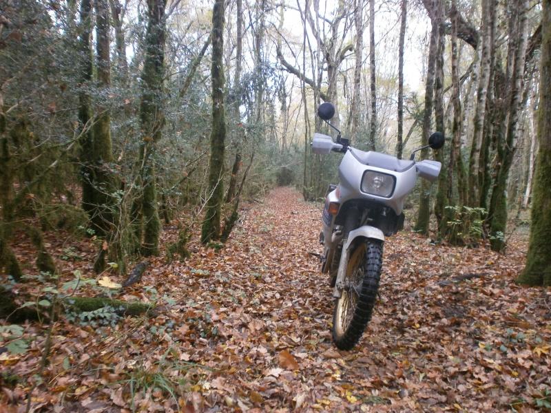 Promenade dans les bois 482102PA270001