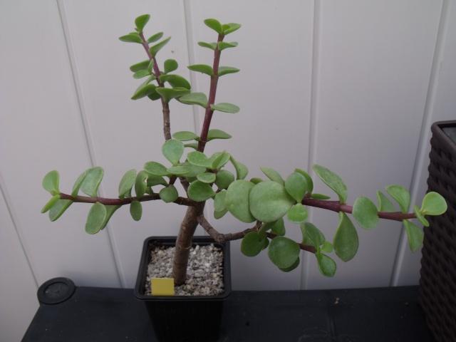 Mes succulentes 2014 482105022