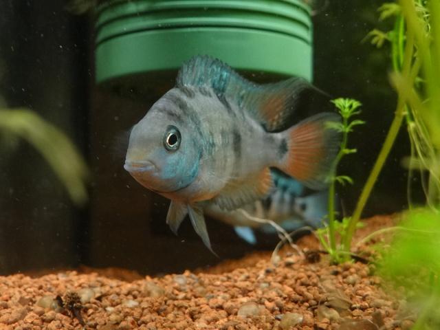 Ma Fish'étagère et les autres  - Page 6 482187DSC07089