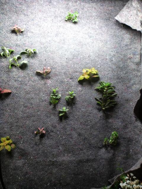 Le nouveau mur végétal de Olivetzou (projet fini à 98%) enfin les leds - Page 2 485331P1010085