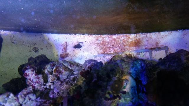 Mon premier aquarium eau de mer - Page 3 48711920141202190804