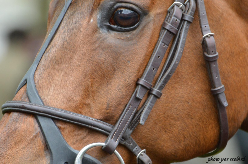 Prix Ganay 2014 (Gr. I, Longchamp) 27-04 : Cirrus des Aigles (+photos) 492366170001
