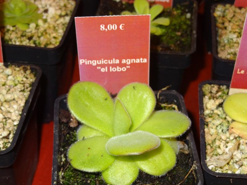 retour de la foire au plante rare de st priest 492723arno033