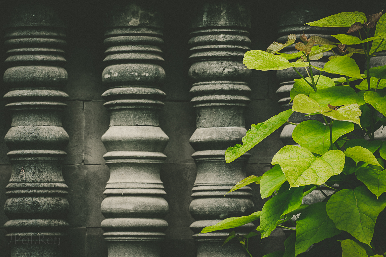 Sortie Pairi Daisa - 18/06/16 - Photos de paysages 498393FF18par0605