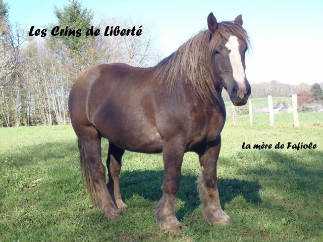 Dept19, 1 an, FAFIOLE, OC Trait Breton, réservée par Aline03 (Novembre 2016) - Page 2 500110Betty4
