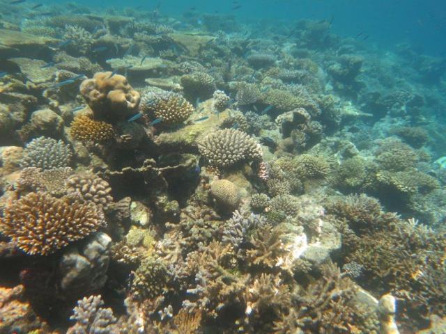Quelques photos de mes dernières vacances (Maldives) 501149IMG3464