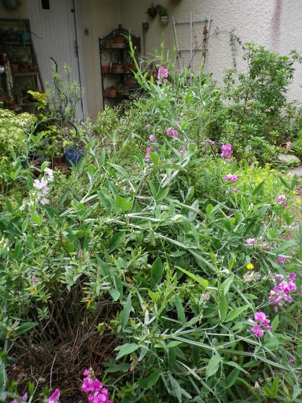 cadeaux du jardin, juin juin - Page 6 501784IMGP4855
