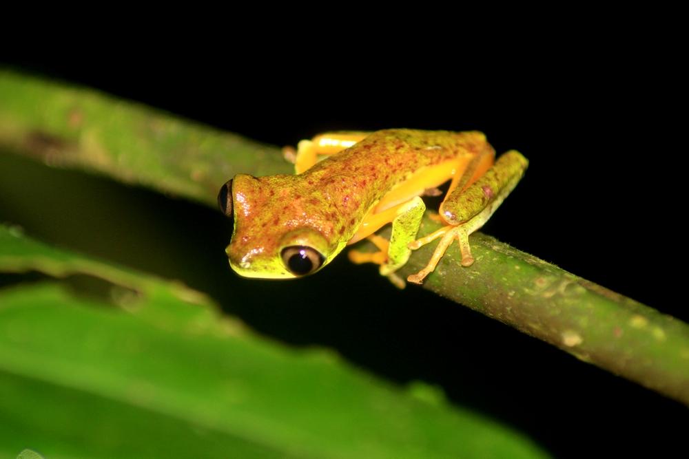 15 jours dans la jungle du Costa Rica - Page 2 501939lemur4r