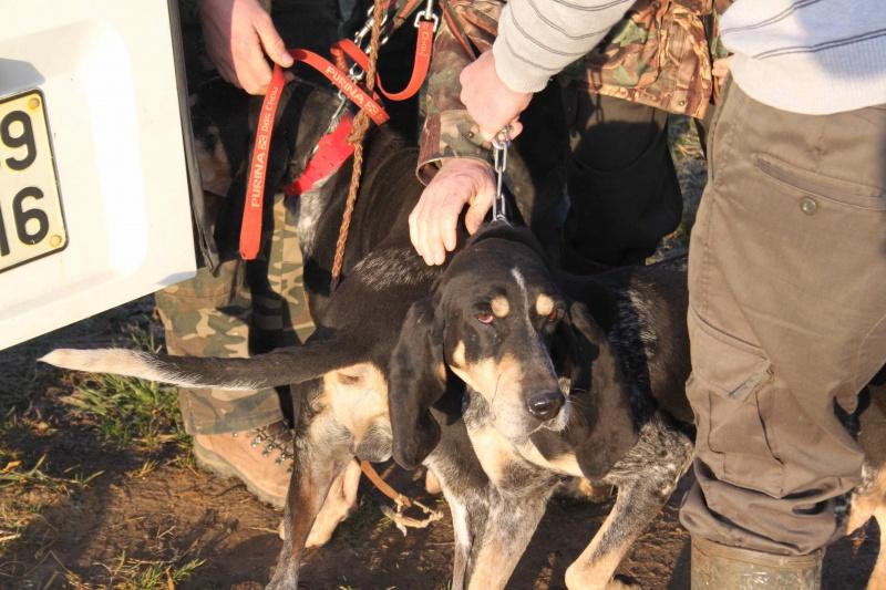 Brevet de chasse sur lièvre Marnay (71) 7 et 8 mars 2015 507805IMG6493