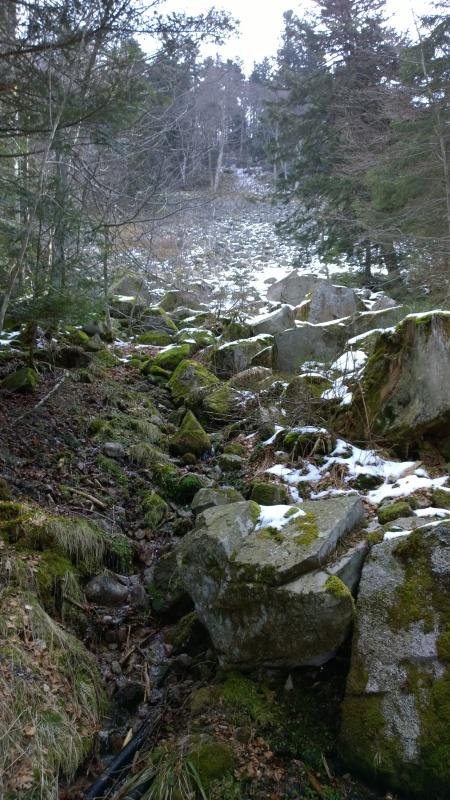 Week-end tourbières dans les Vosges 508330WP20150406110249Pro