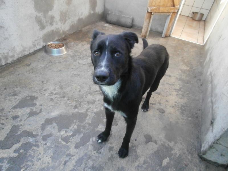 ZEUS (chien croisé berger) 510351PC093698