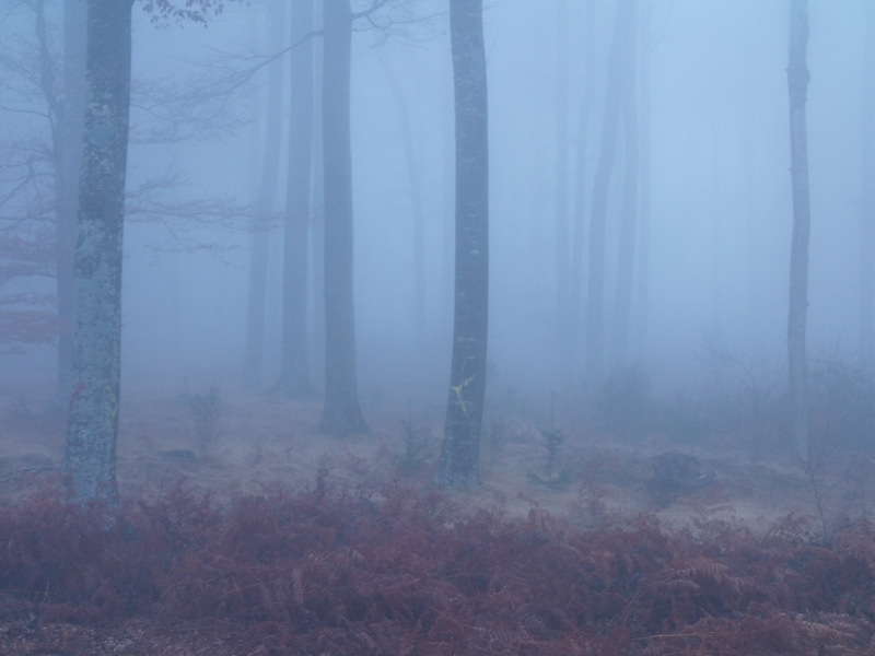 balade dans la brume en partage 510440PC230006