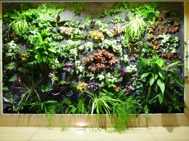 Le nouveau mur végétal de Olivetzou (projet fini à 98%) enfin les leds - Page 4 513309P1010796