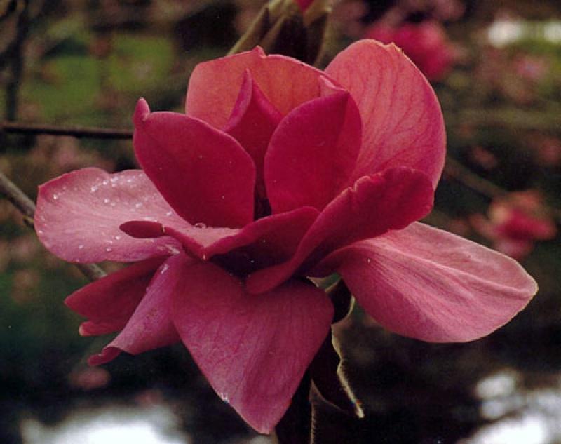 Quel est votre Plante, Arbre, fleur préféré que vous possédez ou non? Si vous n'en aviez qu'une à garder, Laquel/lequel garderiez-vous? 51501812740211700001