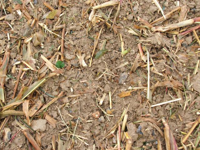ble derriere un mais grain en semis simplifié 516514toussain_2010_115