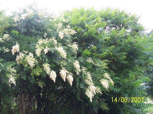 les plantes que je propose 516919fleurs_du_jardin_304___