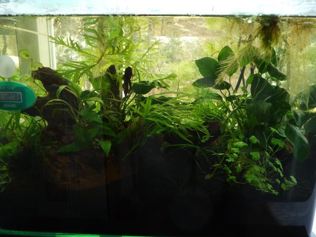 scaper tank 35l betta lumière naturelle 519457P1090443