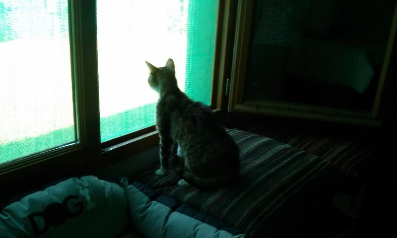 DUCHESSE - chatte femelle, née 2011/2012, borgne - (PASCANI) - adoptée par Chantal Pascal (dpt 63) - Page 3 5196357422