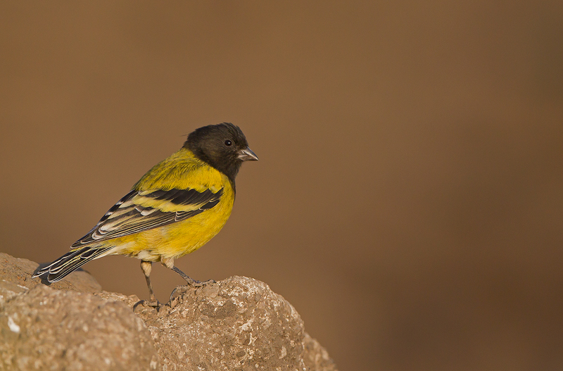 un oiseau à trouver Martin 20 mars trouvé par Martine - Page 2 52160373Y5644