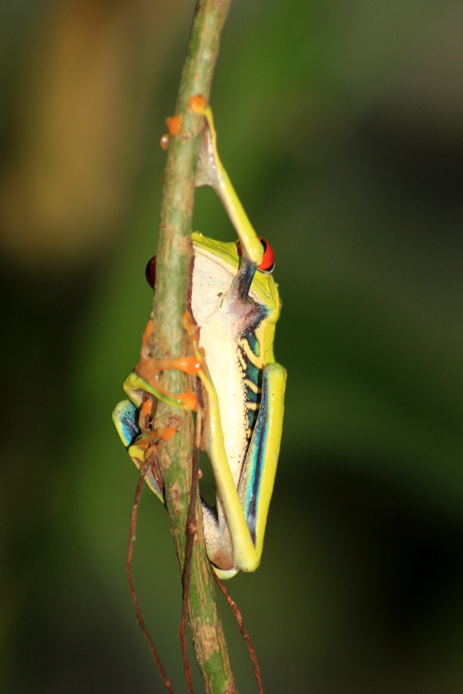 15 jours dans la jungle du Costa Rica - Page 2 523251aga7r