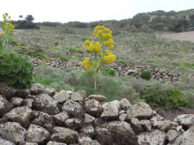 Lanzarote, l'île esthétique 529006P1040047