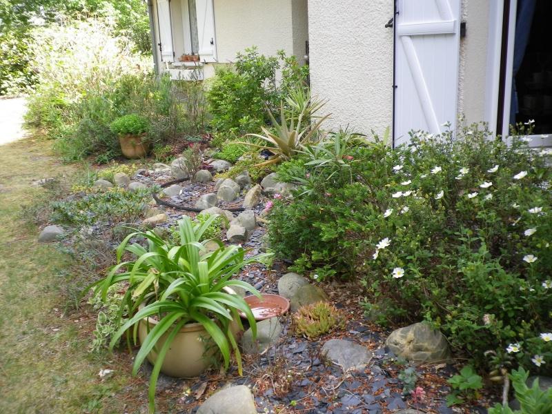 Ma rocaille ...... et mes grassouillettes - Page 3 541909IMGP4626