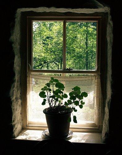 Des fenêtres d'hier et d'aujourd'hui. - Page 4 5438595495273333672767211441096404495n