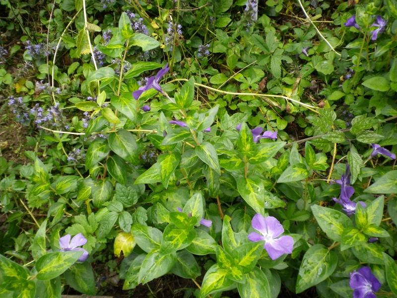 (40) Plantarium et chemin de ronde - Gaujacq - Page 2 543896IMGP4522