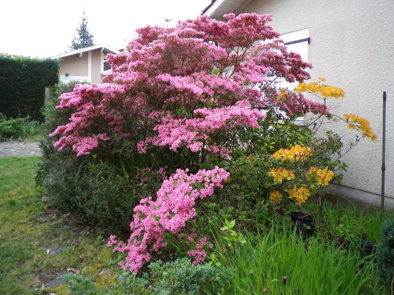 Quelques floraisons 545443IMGP1427