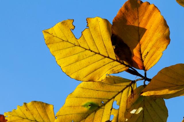 Les couleurs de l'automne 549415IMG_7612_DxO__640x480_